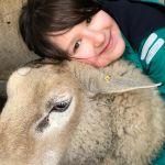 """Schafprojekt - FRICKE Social Day Abstimmung. Wir suchen Spenden für unser """"Schafprojekt""""."""